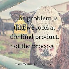 the problem is that we look at the final product, not the process - please stop financing animal cruelty go vegan for cruelty free dining Vegetarian Quotes, Vegan Quotes, Vegan Vegetarian, Vegan Facts, Vegan Memes, Vegan Humor, Animal Liberation, Stop Animal Cruelty, Animal Cruelty Quotes