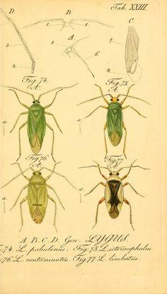 plates 1-4 - Die wanzenartigen Insecten : - Biodiversity Heritage Library