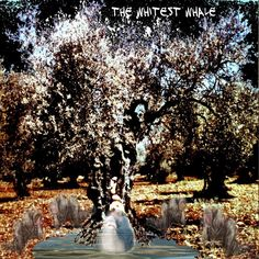 """Check out my new album """"The Whitest Whale"""" distributed by DistroKid and live on Tidal!"""