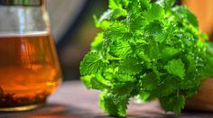 Meduňka - jak ji sklízet a skladovat + 5 domácích receptů Lemon Balm Tea, Relaxing Tea, Natural Sleep Aids, Detoxify Your Body, Healing Herbs, How To Make Tea, Korn, Herb Garden, Garden Club