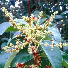 Flor da árvore.