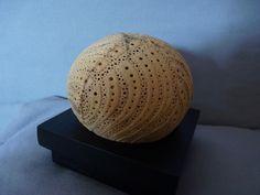 Rêve d'olakira , lampe d'ambiance esotérique en noix de coco sculptée