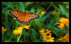 The Butterfly Effect by Parisa Salehi on 500px