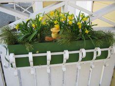 Pääsiäinen. Narsisseja ovenpielessä.