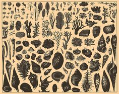 Marine Life. From the Brockhaus and Efron Encyclopedic Dictionary