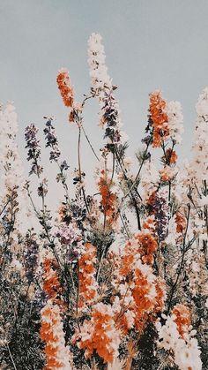 Cute Patterns Wallpaper, Aesthetic Pastel Wallpaper, Aesthetic Backgrounds, Aesthetic Wallpapers, Aztec Pattern Wallpaper, Country Backgrounds, Flower Phone Wallpaper, Fall Wallpaper, Iphone Background Wallpaper