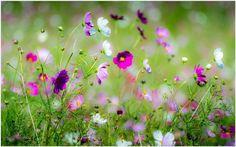 Beautiful Spring Flowers HD Wallpaper | beautiful spring flowers wallpapers, wallpaper hd of beautiful spring flowers