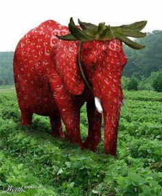 Zo valt een olifant niet op tussen de aardbeien - How do you hide an elephant in a strawberry patch :) Elephant Quotes, Elephant Love, Elephant Art, Rare Animals, Animals And Pets, Funny Animals, Animal Mashups, Animal Memes, Animal Original