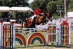 Mezcalero    1987 Dutch Warmblood (Voltaire x Ramiro Z)     Son of Voltaire, has competed in many international events, including WEG representing Mexico. Producing great and proven offspring