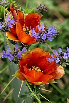Orange & purple (I love poppies!) ~~~~ I love the antique orange color vs the vibrant clear orange you usually see