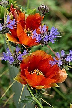 Orange & purple (I love poppies!) ~~~~ I love the antique orange color vs the vibrant clear orange you usually see