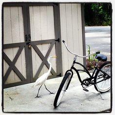 Biking (and birding) at Skidaway Island State Park • Visit Savannah