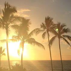 Yesterday is history Tomorrow is a mystery Today is a gift  That is why it is called the present  Maui, Hawaii Sunset and Palm Trees