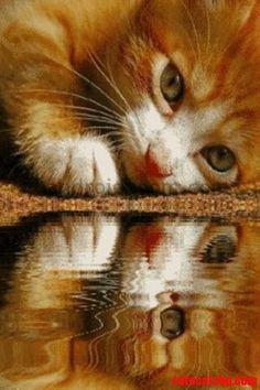 Sweet! - http://cutecatshq.com/cats/sweet/