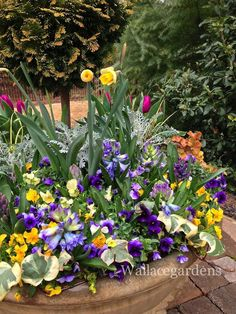 Spring bling! Playing with plants: here come the bulbs. Finally. #gardening #containergarden