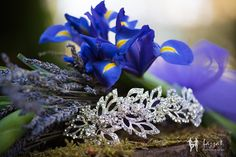 Lazzat Photography | Darrington, WA Wedding | LGBT | Blue Irises |Tiara | Headpiece