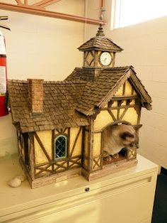 Cat in a Doll House