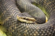 There are several venomous snake species in North America, and snake bites can be deadly. Learn how to identify & treat a snake bite with this infographic.