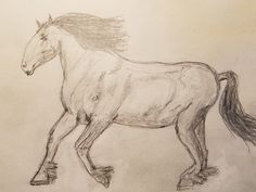 Ex 20 - Horse sketch - Clydesdale