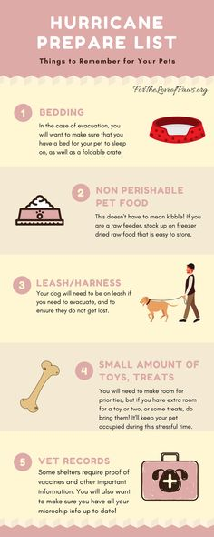 Prepare your pets for Hurricane Irma! Be prepared to evacuate with your dogs and cats. #hurricane #pets