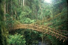 #Puente de lianas en la amazonia. Vía twitter @Estructurando #Ingeniería