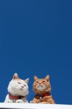two cats, one happiness