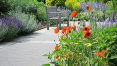 Guide to Start a Perennial Garden - Backward Garden Perennial Flowering Plants, Full Sun Perennials, Sun Plants, Flowers Perennials, Planting Flowers, Garden Site, Garden Tools, Garden Ideas, Biennial Plants