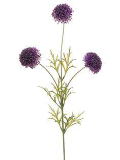 Dark purple allium. $3.79.