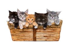 Must See the Cutest Baskets of Kittens | http://mycatcentral.com/baskets-cute-kittens/