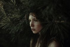 Song of the forest II