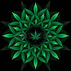 Illustration of Round pattern from cannabis leaf on black vector art, clipart and stock vectors. Weed Wallpaper, Phone Screen Wallpaper, Cannabis Wallpaper, Marijuana Art, Marajuana Leaf, Arte Bob Marley, Stoner Art, Weed Art, Mandala Tattoo