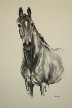 Original energy and movement equine charcoal horse sketch art drawing 'Curious' by H Irvine