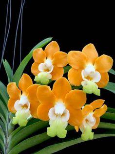 Strange Flowers, Unusual Flowers, Rare Flowers, Flowers Nature, Amazing Flowers, Beautiful Flowers, Orchids Garden, Orchid Plants, Exotic Plants