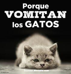 Las Razones Más Comunes del Vómito en Gatos