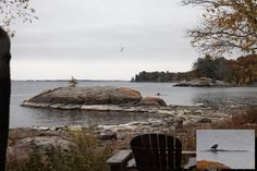 Two Raleigh Island firsts. Its most regal ever visitor, surveying the island from a shoal that in all the years I've been here, has never before surfaced.