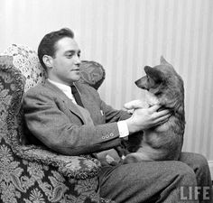 Such doge - many love - great handsome. Richard Todd and friend, Classic Hollywood, Old Hollywood, Richard Todd, Hollywood Poster, Puppies And Kitties, Classic Movie Stars, Mixed Breed, British Actors, Ponies