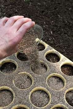 Tips for Growing Great Carrots.                                                                                                                                                                                 More