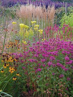 Monarda, Helenium, Carl Forester Grass, Fire Tail (persicaria), and patrinia