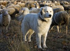 Was hat der Hund des Königs mit dem Leben eines Straßenhundes zu tun? Auf ihren Reisen durch das Land des Lächelns begegneten Enver Hirsch und Gabriele Dünwald vielen Abenteuern und vielen Hunden