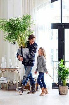 Die richtige Zimmerpflanze für das Kinderzimmer: Kentia-Palme #pflanzenfreude