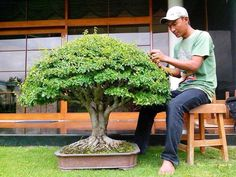 Bonsai Broom. This is how I would like to spend my time, every hour every day.