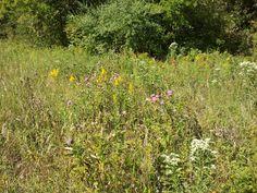 2011-09-102bprairie2bcompostion.jpg (1600×1200)