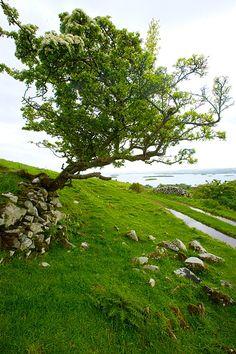 County Mayo landscape, Western Ireland