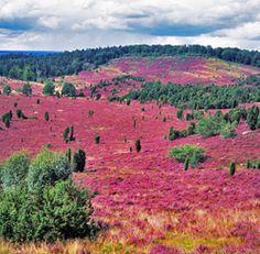 Lüneburger Heide, Germany Repinned by www.gorara.com