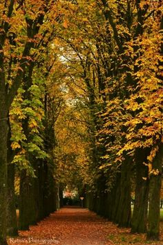 A beautiful autumn day in Enschede. Here the 'kastanjelaantje'...