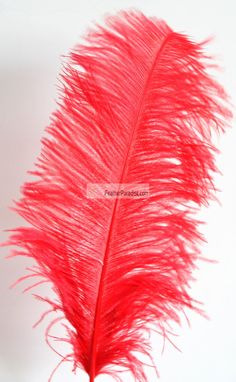 Red Ostrich Feathers 10-12 inch Sanitized and Hand-sorted 12 Pieces