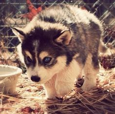 It's a baby wolf!!!!