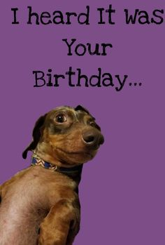 Shop Funny Dog Birthday Card created by IcarusAvis. Happy Birthday Girl Quotes, Happy Birthday Wishes For A Friend, Friend Birthday Quotes, Birthday Cards For Mom, Birthday Wishes Funny, Happy Birthday Messages, Funny Happy Birthday Pictures, Birthday Greetings, Birthday Brother In Law