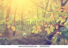 Nature Stockfoto's, afbeeldingen & plaatjes   Shutterstock