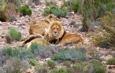 Safari i Sør-Afrika, jakten på de fem store - Rundtekvator